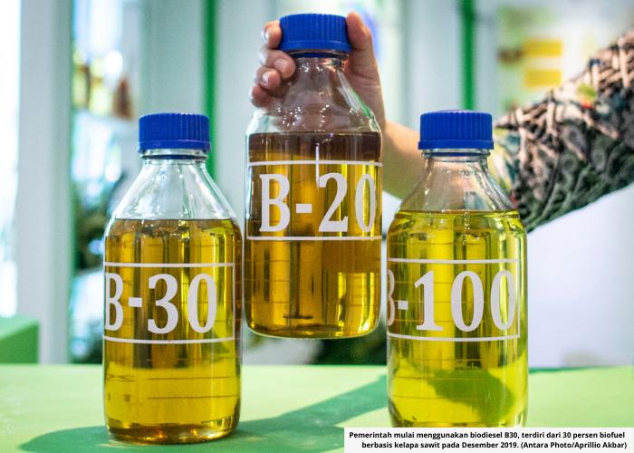 Indonesia Raih 2 Gelar: Raja Minyak Sawit &  Raja Biodiesel Dunia