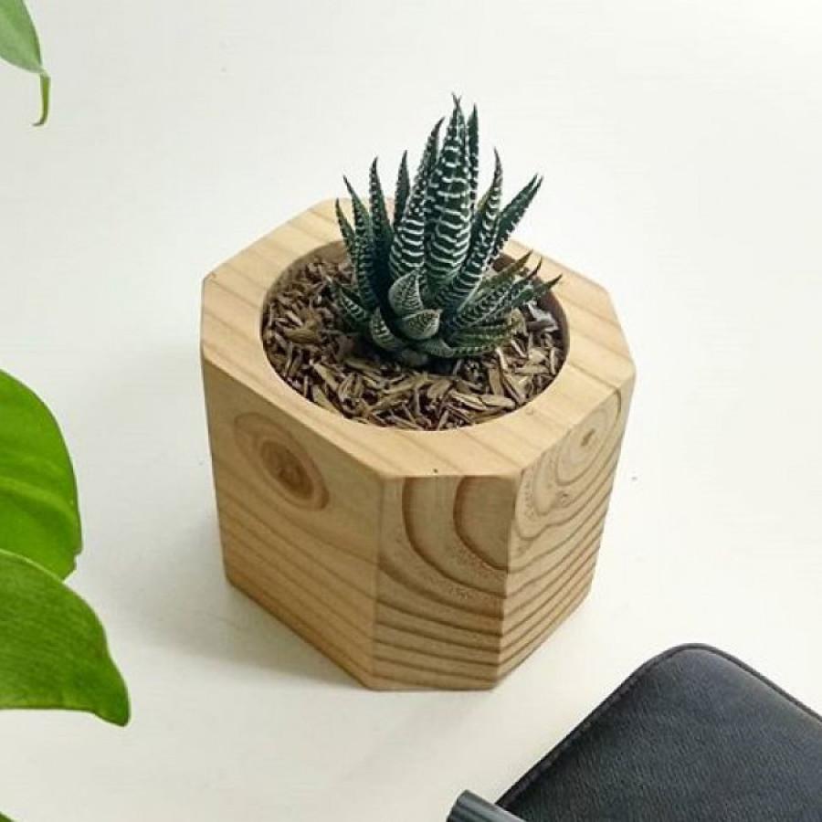 Hastha - pot kayu
