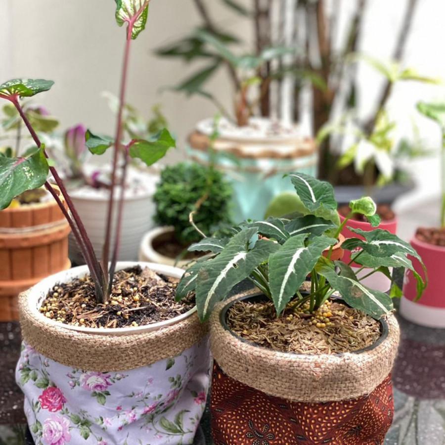 Pot Plant Cover