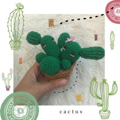 cutie-cactus