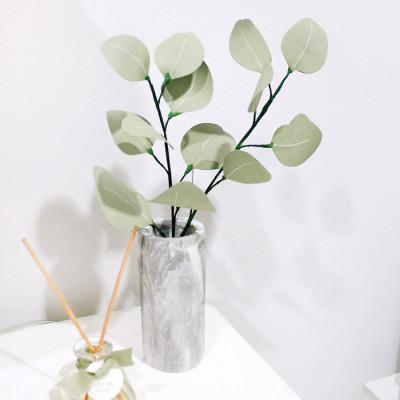 eucalyptus-leaves-daun-kertas-eukaliptus