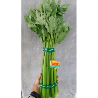 celery-stick